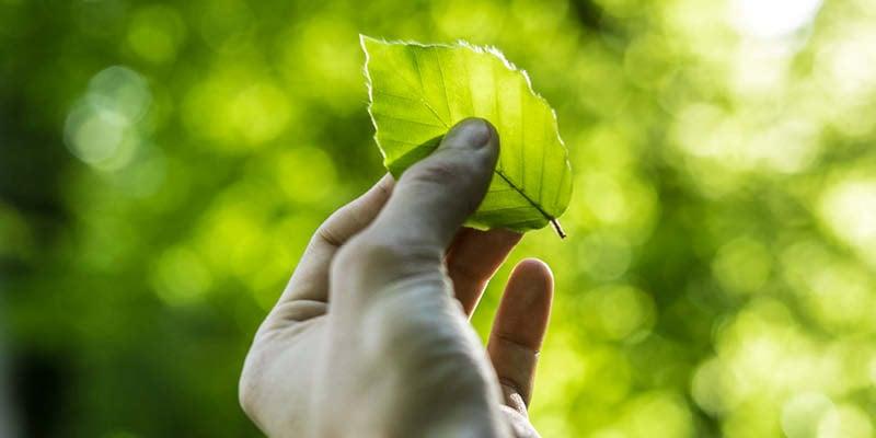https://f.hubspotusercontent30.net/hubfs/4407739/Blog_Tips_Nachhaltigkeit.jpg